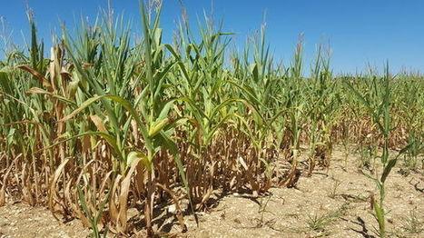 Dordogne : la sécheresse asphyxie les cultures et inquiète les agriculteurs | Agriculture en Dordogne | Scoop.it