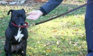 Dog Body Language: What is your dog trying to tell you? | Care2 ... | Pet Health | Scoop.it