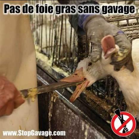 Une info par jour #10 | Stop Gavage | Nature Animals humankind | Scoop.it