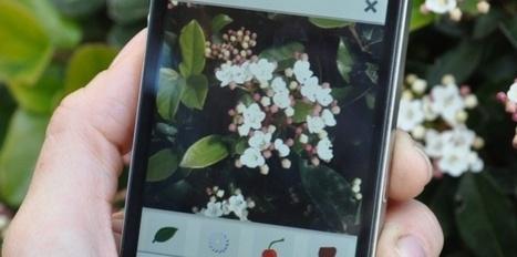 Pl@ntNet : l'application smartphone qui identifie les végétaux | Atelier Jardin de la Gimbrère | Scoop.it