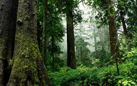 Evaporation: Closing the Gap between Forest and Urban Water Flows | Biomimicry | Scoop.it