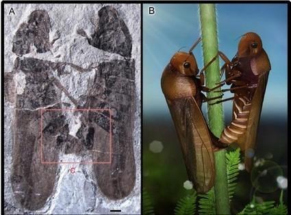 Accouplement de cercopes en Mongolie Intérieure ou le Kama-Sutra des insectes   EntomoScience   Scoop.it