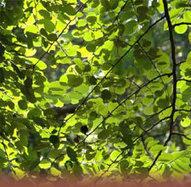 Deep ecology - Blogs@VT | ecosophy | Scoop.it