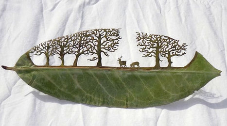 Top 15 des sculptures sur feuilles de Lorenzo Duran, l'homme qui remodèle la Nature | De l'art | Scoop.it