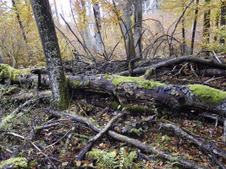 Fungi associated with decomposing deadwood in a natural beech-dominated forest   MycorWeb Plant-Microbe Interactions   Scoop.it