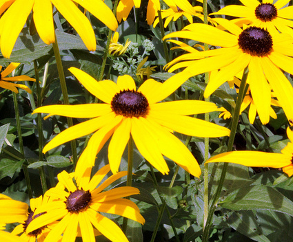 Top 5 Tips for Growing Wildflowers | Annie Haven | Haven Brand | Scoop.it