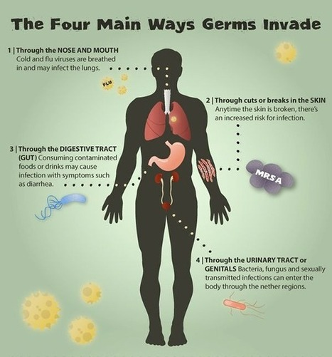 The Four Main Ways Germs Invade - [InfoGraphic] | Liquid Health News | Scoop.it