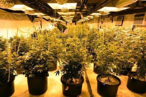 Colorado issues massive recall of pesticide-tainted marijuana   BoogieFinger Politics   Scoop.it