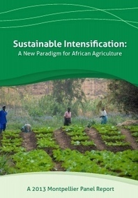 2013 Report - Sustainable Intensification | Piccolo Mondo | Scoop.it