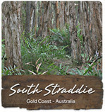 Environment and cultural heritage - Tipplers Passage - South Stradbroke Island   Year 11 Biology - Moreton Bay Field Report   Scoop.it