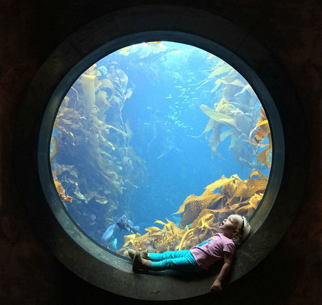 Picture of the Day: Awestruck at the Aquarium | The Web Things | Scoop.it