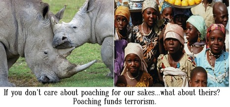 Nigerian Kidnappings: The Link to Poaching | GarryRogers NatCon News | Scoop.it