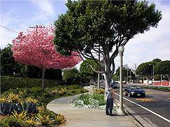 Sepulveda sidewalks get a new look | 90045 Trending | Scoop.it