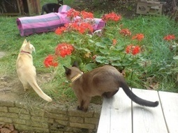 Three lively cats need a lady sitter (non smoking)  village location, Summer   House Sitting   Scoop.it