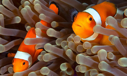Can We Save Coral Reefs?   Climate change challenges   Scoop.it