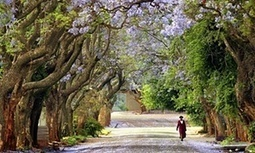 More trees on your street means fewer health problems, says study   GEOGRAFIA, PAISATGE I MEDI AMBIENT   Scoop.it
