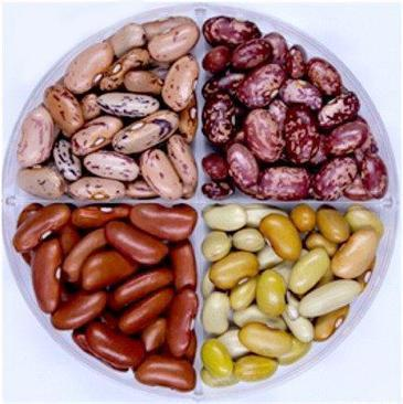 Fast-cooking dry beans provide more protein, iron than 'slower' varieties - ACS (2016)  | Plant Biochemistry | Scoop.it