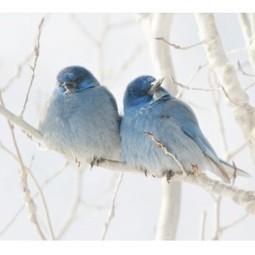 Colorful Birds In Love - HomeDecorDesigns.com | Home Decor Designs | Scoop.it