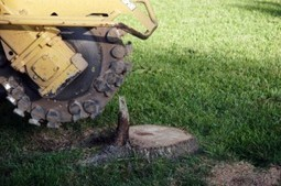 We offer stump grinding at affordable rates in Thousand Oaks CA | Map Tree & Landscape Service | Scoop.it