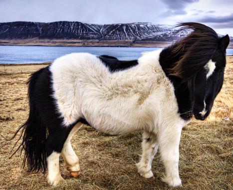 18 Breathtaking Photos Of Wild Horses Around The Globe | Horse Stuff | Scoop.it