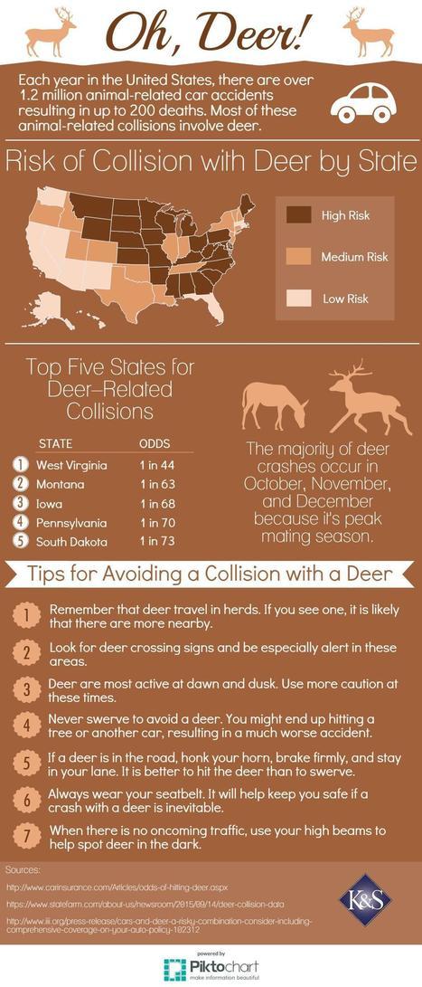 Deer Accidents - Infographic   Accidents, Recalls and Awareness   Scoop.it