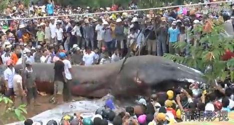 Un monstre marin inconnu découvert au Vietnam | Ouverture sur le monde | Scoop.it