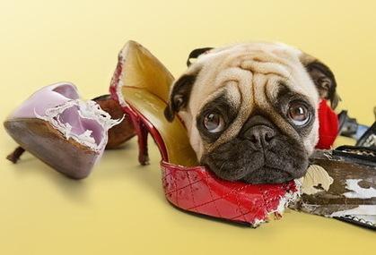 100% Natural dog treats - All Natural Pet Treats Australia | Pet Business Blueprint | Scoop.it