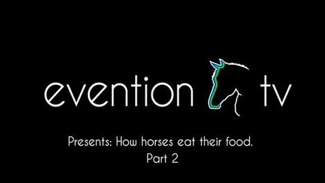 How  Horses Eat Their Food Pt 2 | Eventing | Scoop.it