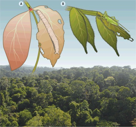 Science: On Tropical Forests and Their Pests (2014) | Plant & Agriculture | Scoop.it