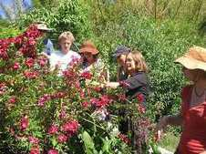 Edible Flowers - Articles - Permaculture College Australia | Permaculture News | Scoop.it