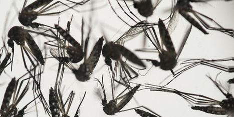 Première naissance d'un bébé atteint d'une microcéphalie liée au virus Zika en Europe | Toxique, soyons vigilant ! | Scoop.it