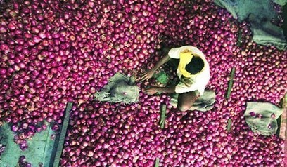 MEP on onion export to help stabilize prices - Sanchar Express | News | Scoop.it