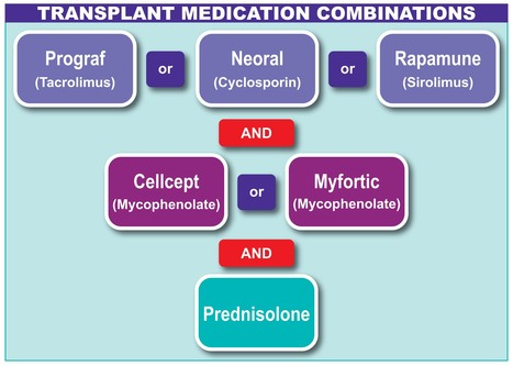 Liver Transplant Drug Cost in India | Liver Transplant India | Scoop.it
