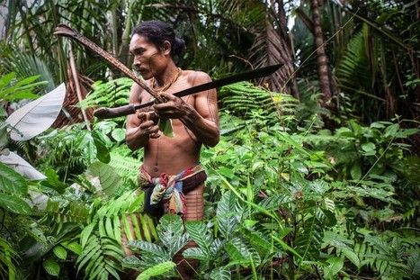 Indigenous Peoples Vow to Map Customary Forests - Jakarta Globe   Ethnoecology   Scoop.it