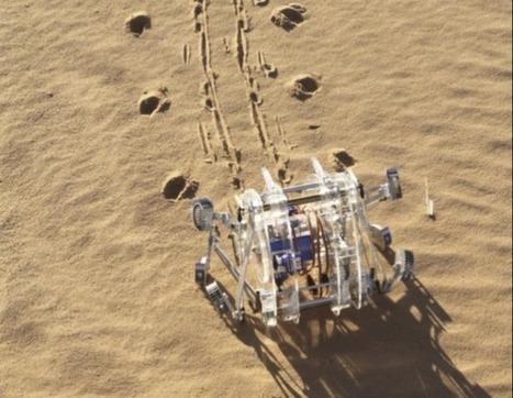 Scientist develops cartwheeling Moroccan spider-inspired robot for Mars mission | Vloasis sci-tech | Scoop.it