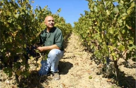 Do you know Luca D'Attoma, one of the top Italian wine oenologist? | Vitabella Wine Daily Gossip | Scoop.it