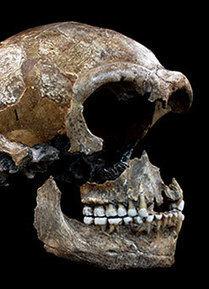 Néandertal 80% carnivore et 20% végétarien - Hominidés | Aux origines | Scoop.it