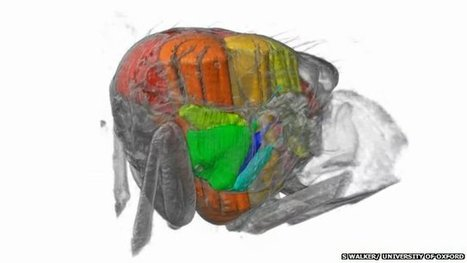 3D footage from inside a flying insect   Weird Science   Scoop.it
