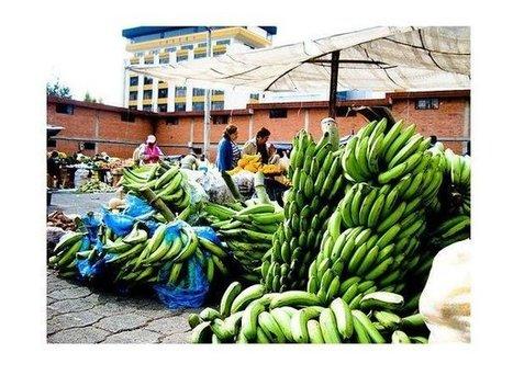 ¿Qué son las microfinanzas? | Servicios financieros | Scoop.it