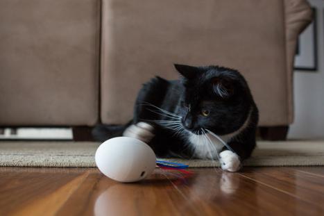 SHRU - the intelligent cat companion™ | Quantified Pet | Scoop.it
