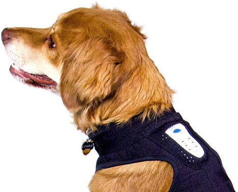 Calmz anxiety relief system | Quantified Pet | Scoop.it