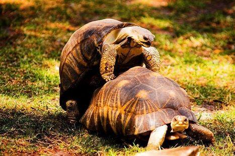 Chez les animaux aussi, quand il y a du sexe, il y a du plaisir ! | put.it put.it mix.it shake.it | Scoop.it