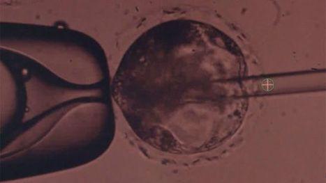 La revolucionaria técnica para desarrollar órganos humanos en cerdos - BBC Mundo | Apasionadas por la salud y lo natural | Scoop.it