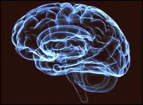 Human brains react similarly while watching a movie | Comunicació | Scoop.it