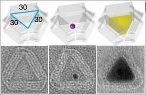 Casting Custom-Shaped Inorganic Structures with DNA Molds | Amazing Science | Scoop.it