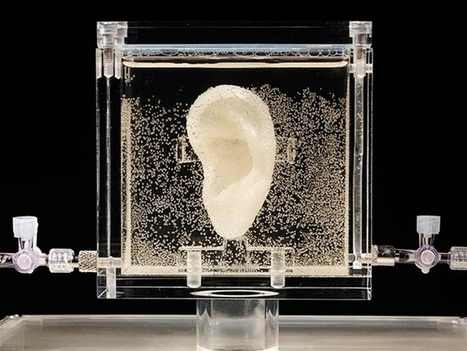 Vincent Van Gogh's Ear Printed Using Living Tissue | Stem Cells & Tissue Engineering | Scoop.it