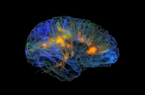 Glass Brain: Virtual Reality Meets Neuroscience | Amazing Science | Scoop.it