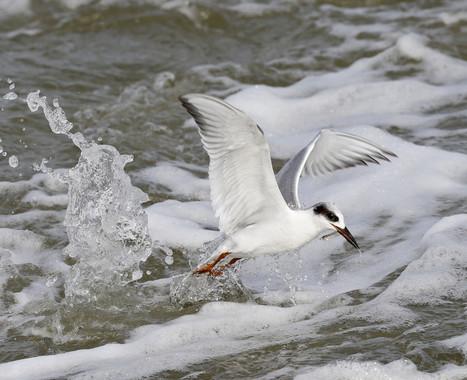 Wildlife Wednesday: In flight | Flickr Blog | Birds | Scoop.it