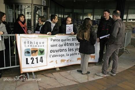 Les opposants à la ferme dite des 1000 vaches manifestent à Bordeaux - Bordeaux Gazette actualités et informations Bordeaux CUB | Bordeaux Gazette | Scoop.it