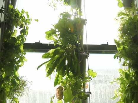 It's Becoming A Lot Easier To Grow Produce In Your Apartment Window | Espacios Reducidos | Scoop.it